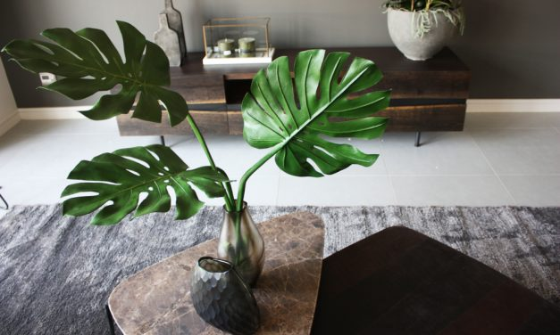 Biophilia: Best Indoor Plants For Your Home
